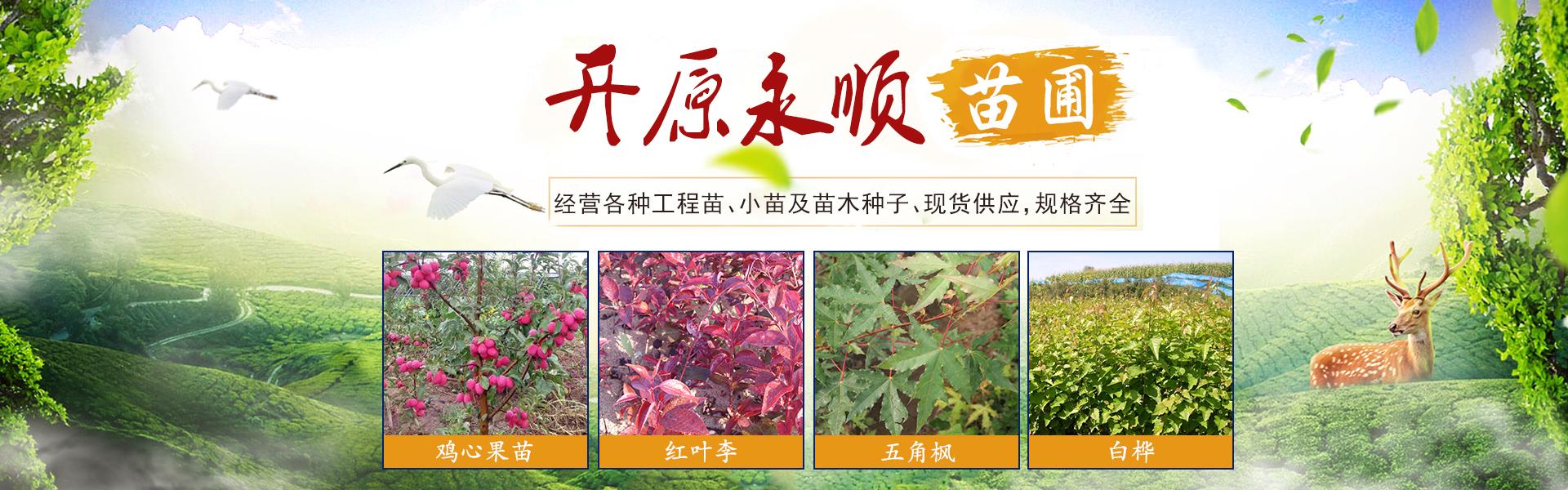 开原紫穗槐,开原红叶李