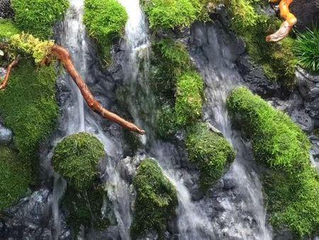 天津热带雨林的概念