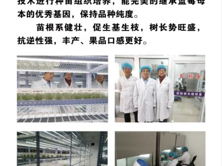 华彩蓝莓组培育苗中心