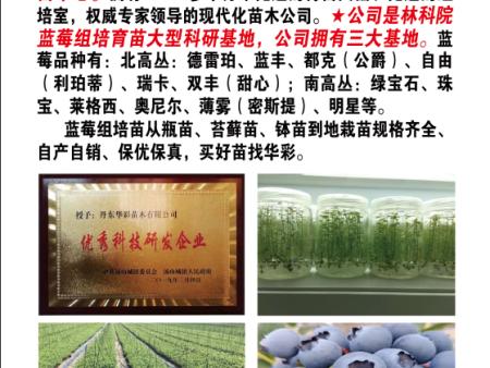 华彩蓝蓉组培育苗中心