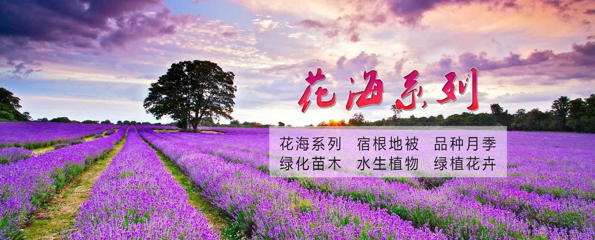 青州市润泽温室园艺有限公司
