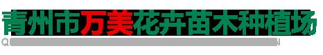 青州市万美花卉苗木种植场