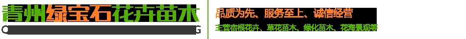 青州绿宝石花卉苗木
