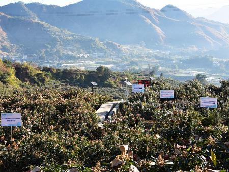 米易枇杷园喷滴灌项目