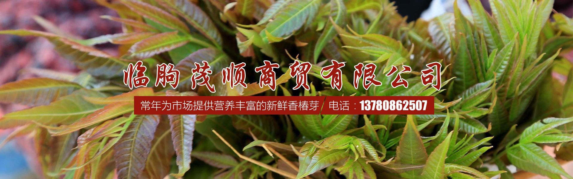 临朐红油香椿树苗