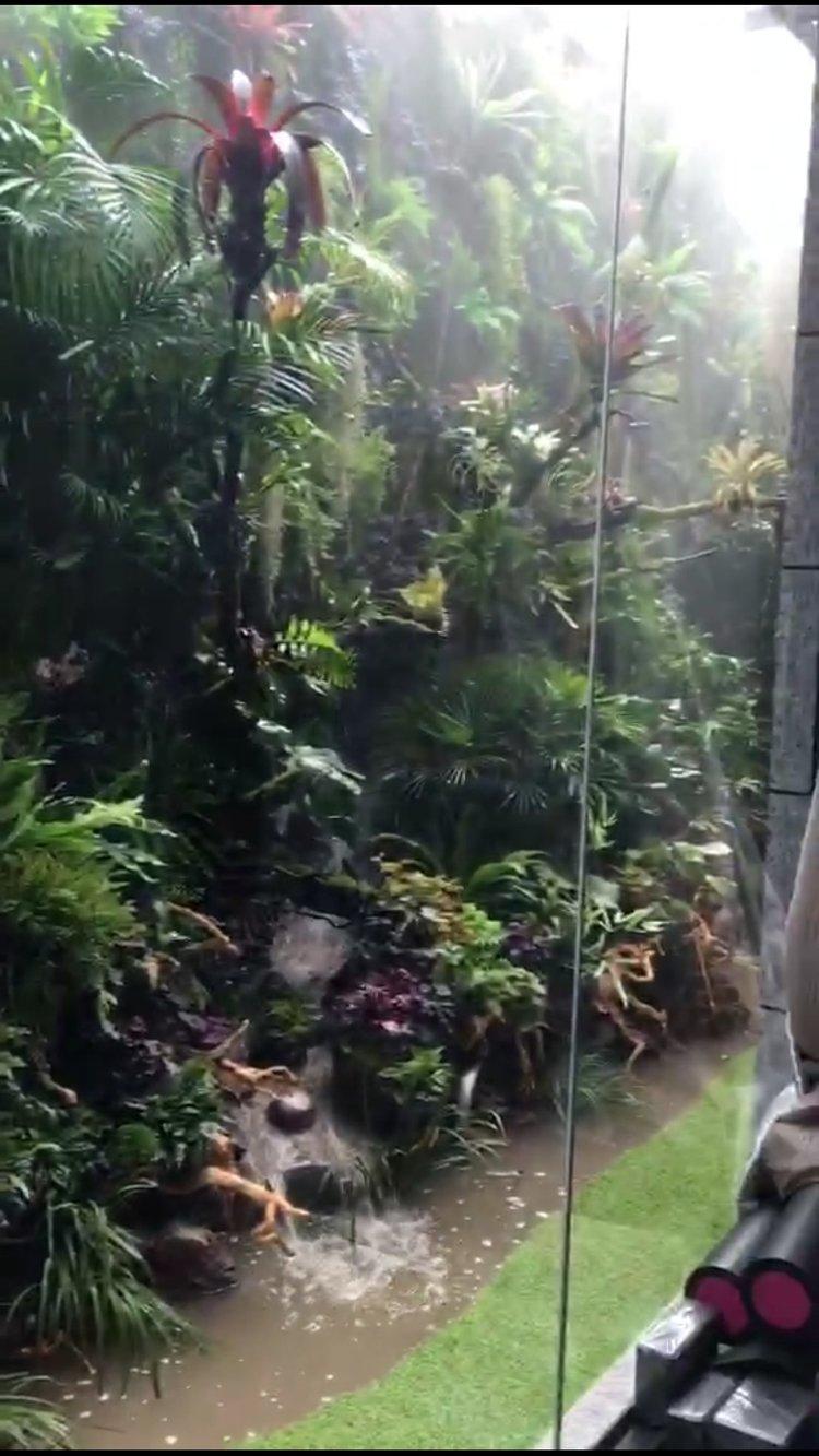 天津热带雨林:了解雨林缸
