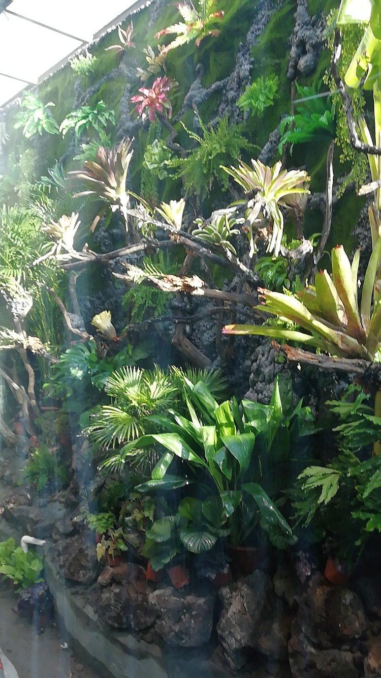 天津热带雨林的制作教程,等好久了吧!