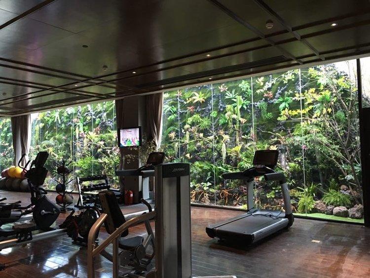 天津微雨林上层的植物选择,了解一下