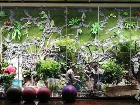 探索天津微雨林中的小世界!