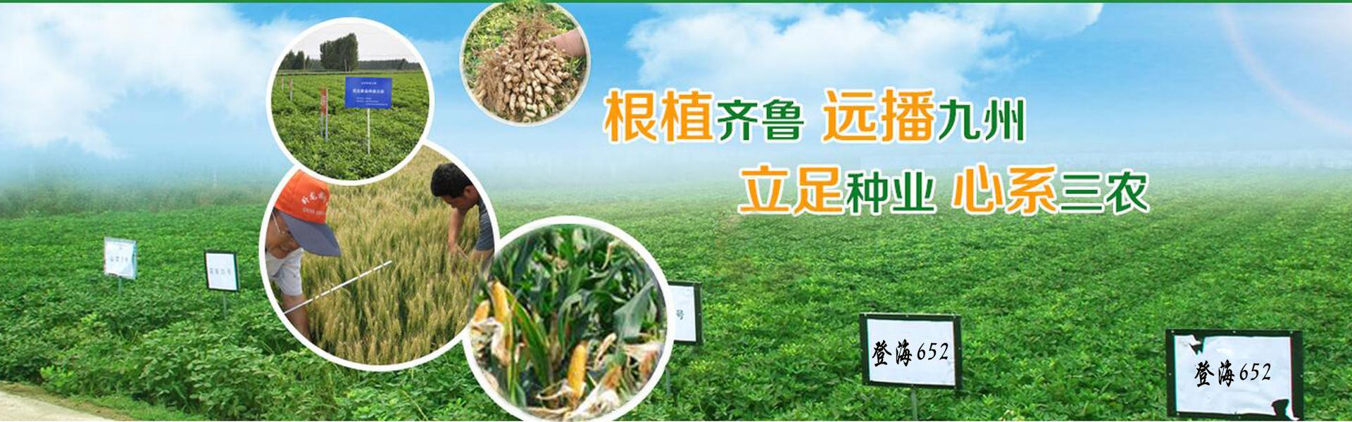 蔬菜种子加工