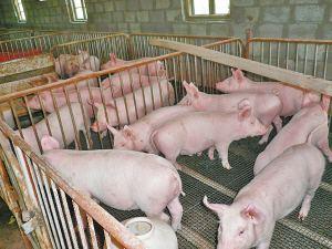 农业乡村部:制止以环保的名义,文明拆迁养猪场