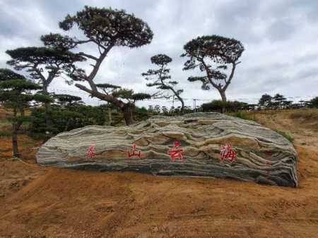 种植造型黑松需要注意苗木树冠透风和透光