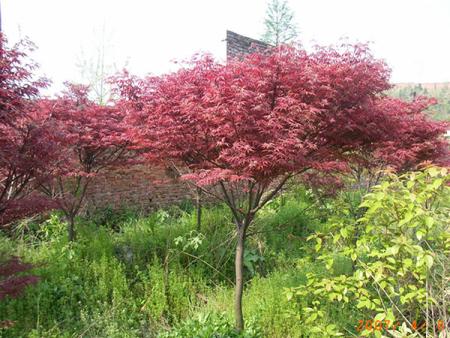 如何提高花木移植的成活率