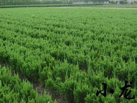十月绿化苗木养护与病虫害防治