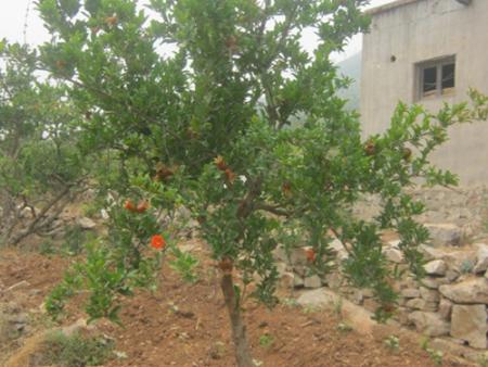 苗木春季栽培種植的注意事項有哪些?