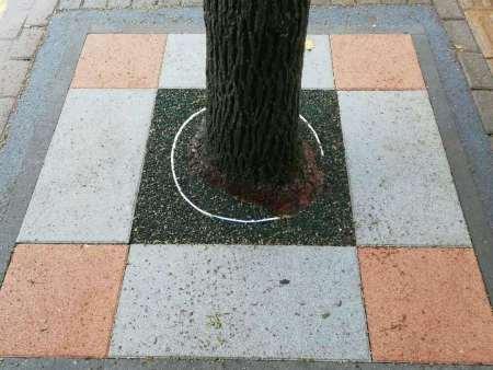 围树坑生态修复