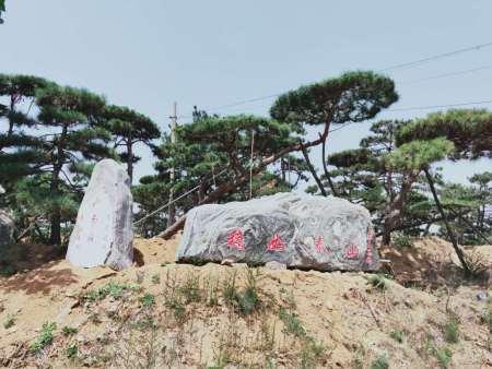 修剪樹木之前要先檢查泰山景觀松的樹體