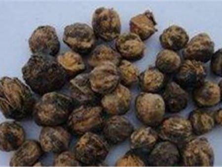 苗木种子——西藏苗木种子批发