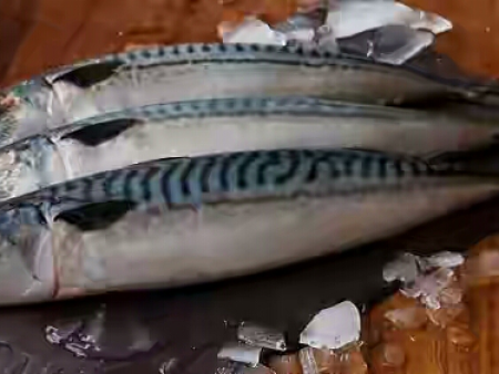 Pacific Mackerel/Atlantic Mackerel(太平洋鲭鱼)