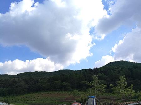 辽宁山黑猪养殖环境