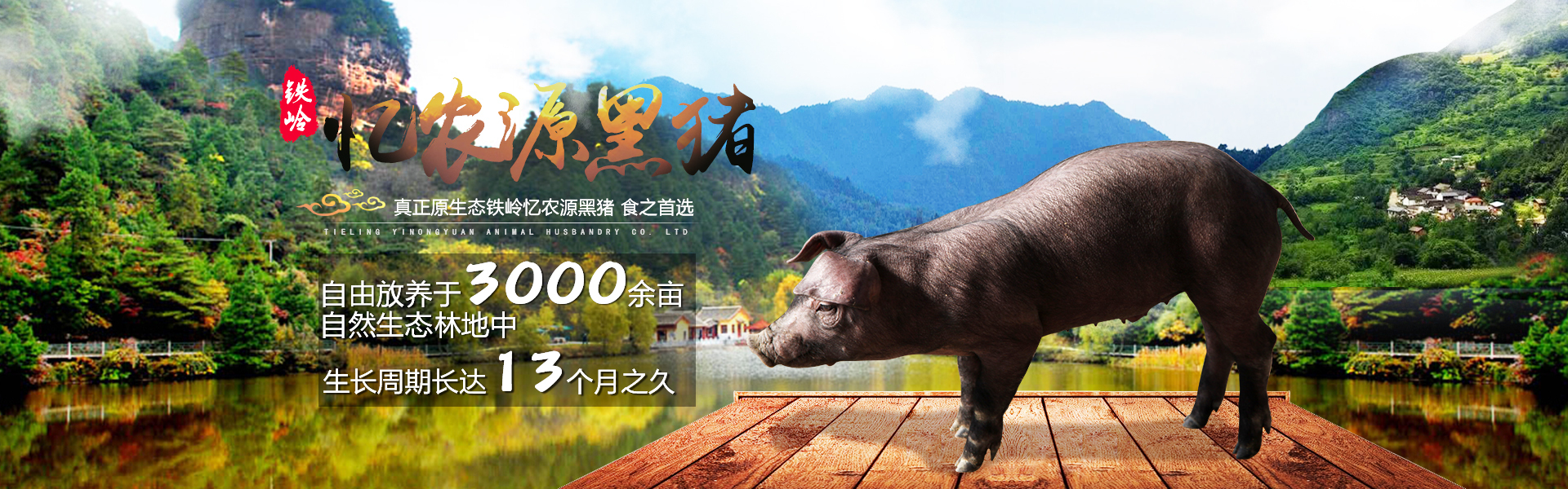 辽宁黑猪,辽宁散养黑猪,散养土鸡,辽宁山黑猪,忆农源黑猪,散养鸡