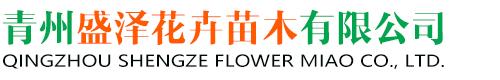 青州盛泽花卉苗木有限公司