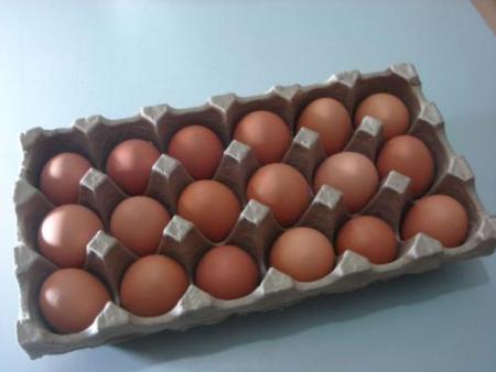 manbetx万博官网下载鸡蛋蛋托厂家直销