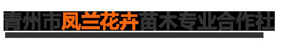 青州市凤兰花卉苗木专业合作社