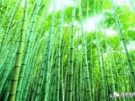 """""""竹子定律""""(告诉我们)"""