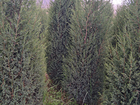 苗木绿化养护中的灌水基础知识