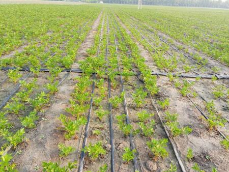 如何做好滴灌带的保养工作?