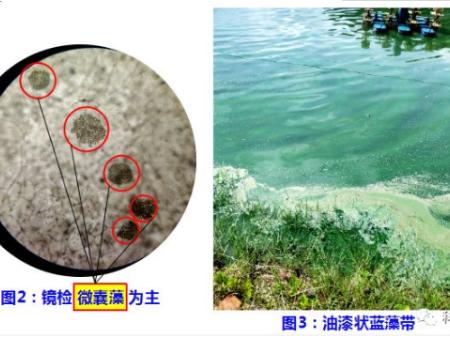 有藍藻,怎么辦?成功處理案例分享給大家