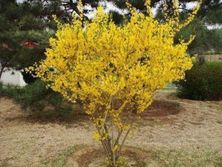 苗圃苗木上的害虫怎么防治?