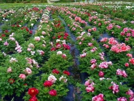 花卉苗木的四季养护要点?