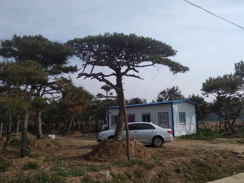 谈一谈造型松树的那不可限量前途!