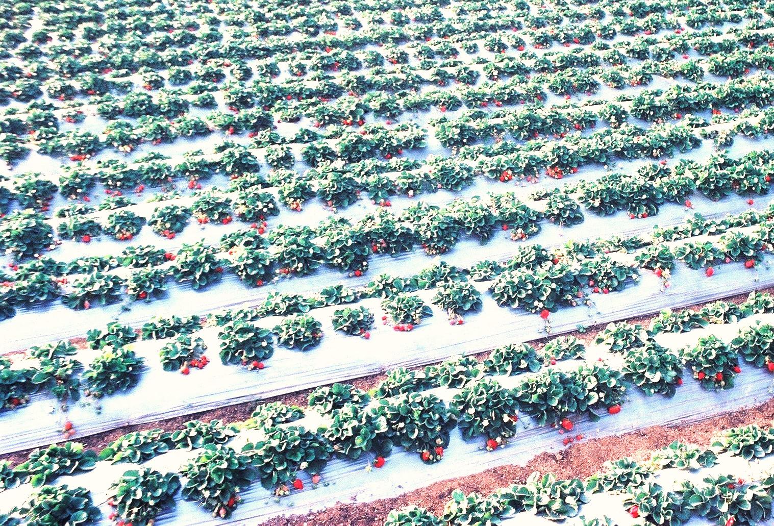 纳米技术在植物源农药应用上功效独特、前景广泛---厦门安稼商贸有限公司转载自世界农化网