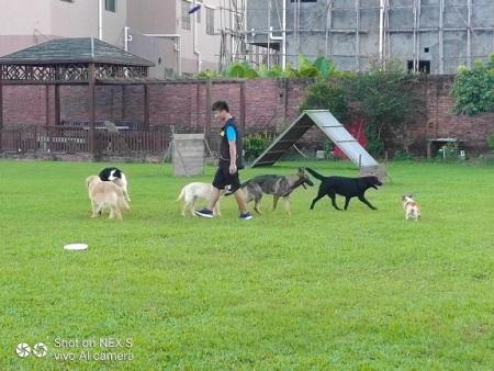 犬类寄养犬类托管惠州犬类托管基地