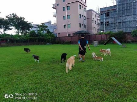 惠州宠物培训惠州宠物训练师培训惠州宠物招生培训