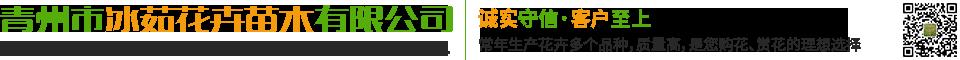 青州市冰茹花卉苗木有限公司