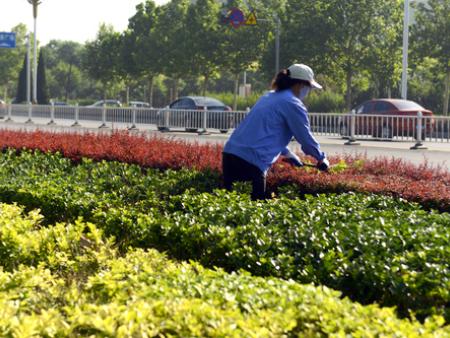 山猫足球直播在线观看绿化养护,甘肃城市绿化养护,山猫足球直播在线观看街道绿化推荐甘肃大龙物业管理绿化公司