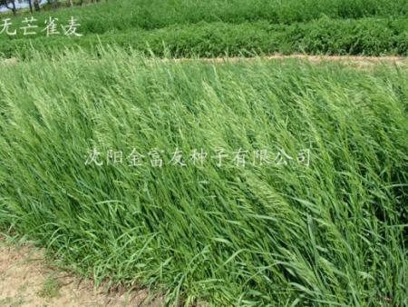 沈阳草坪种子在种植上的条件是什么呢?