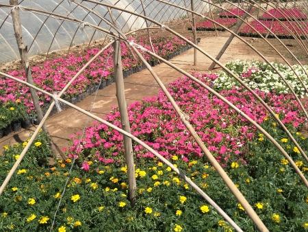 草花在后期养护修剪中该如何做?