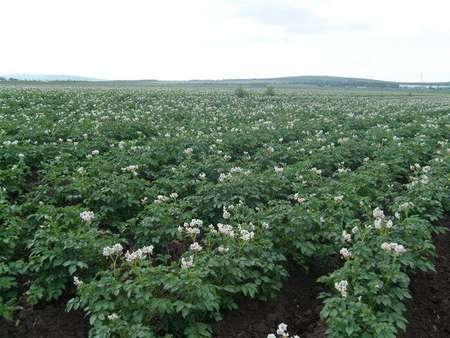 呼伦贝尔市贝博手机生态农牧业科技发展有限公司-技术指导