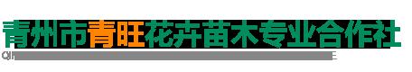 青州市青旺花卉苗木合作社