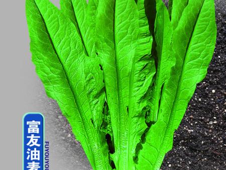 如何鉴别沈阳蔬菜种子质量问题