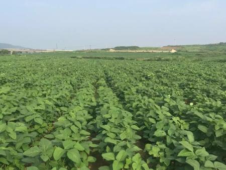 沈阳蔬菜种子常见的催芽方法!