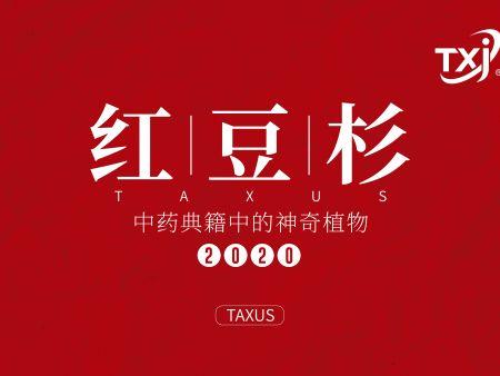 红豆杉被《央视》曝光了,到底有新疆11选5走势图一多神奇?看完你就知道了!