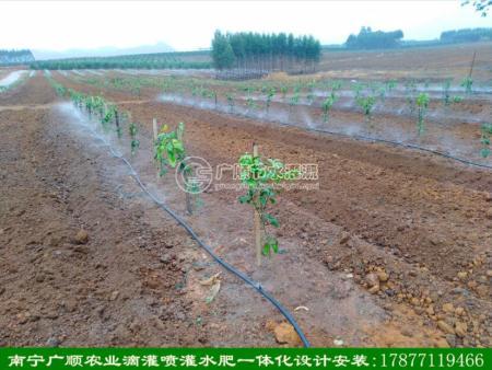 南宁广顺果树喷头抗堵塞灌溉效果好