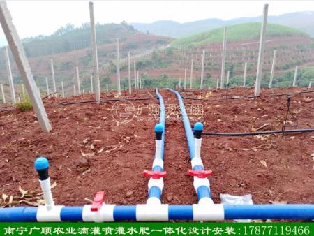 百香果喷灌灌溉管滴灌管安装
