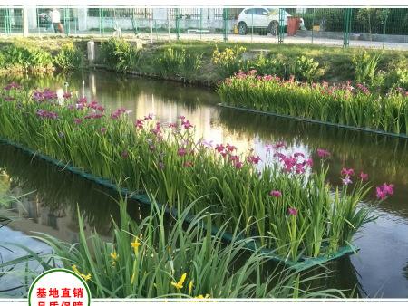 山西忻州河道浮岛植物栽植效果